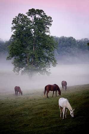 Early morning at the pasture in Cades Cove, Great Smoky Mountains National Park, Tennessee.