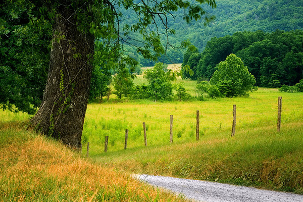 Scene along Hyatt Lane in Cades Cove, Great Smoky Mountains National Park, Tennessee.