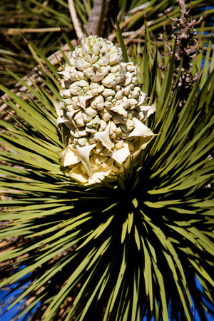 Close up of Joshua Tree National Park, California