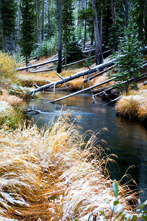 Stream above the Virginia Cascade, Yellowstone National Park, Wyoming