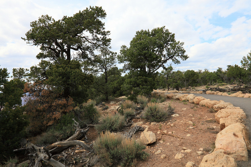 Walking Trail to Yavapai and Mather Point Overlooks