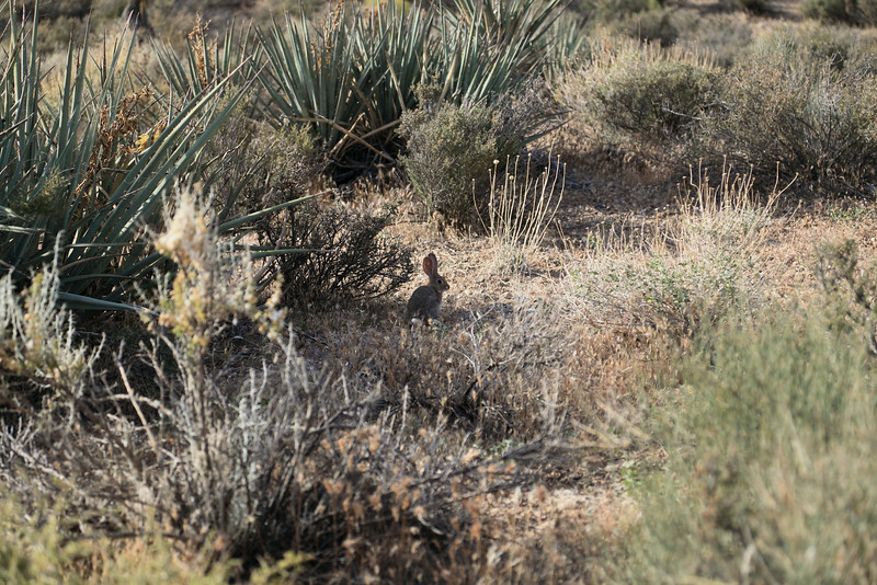 Red Rock Canyon Local Resident