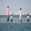 Everyone has a pelican in Miami