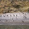 Pelican Beach Anacapa Channel Islands