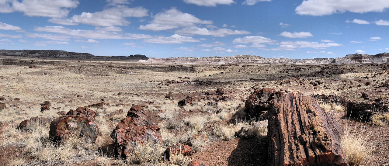 Timber in Petrified Forest