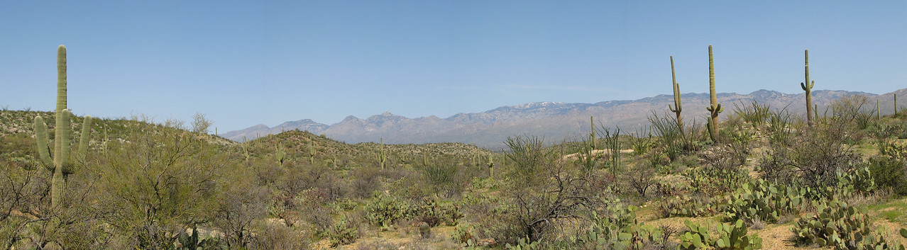 Saguaro Panoramic