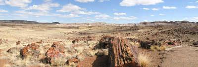 Petrified Forest National