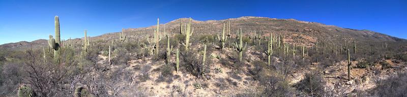 Ruiz Canyon Road