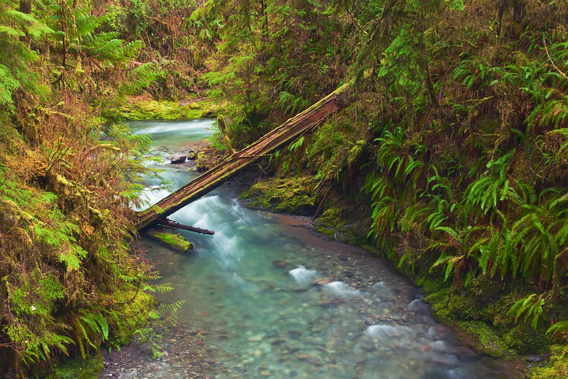 Willaby Creek Gorge, South Shore of Lake Quinault, Olympic National Park