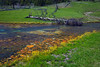 Terrace Spring, Yellowstone National Park