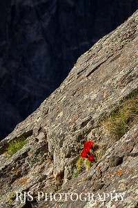 Life on the Edge - Black Canyon of the Gunnison