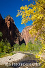Fall in Zion - Zion NP