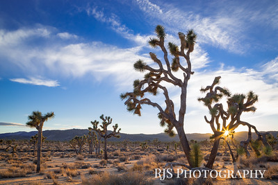 Joshua Tree Sunset - Joshua Tree NP