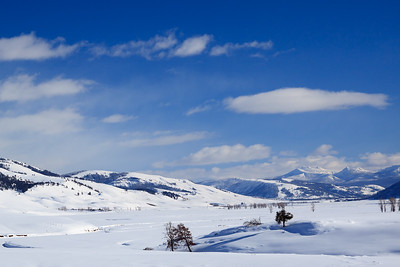 Winter in the Lamar Valley