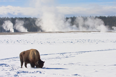 Yellowstone in the Winter