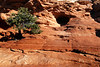 Photos of a tree on the red sandstone in Canyon Lands National Park.