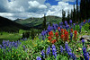 These photos were taken in  American Basin  Co. and Crested Butte Co. You can point your camera in any direction and find some of the best wild flowers and landscape in Colorado.