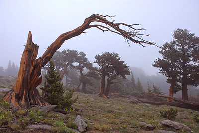 Mt. Evans, Colorado Landscapes.