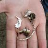 November 13, 2010.  Bones found under an owl's nest at the petroglyphs, Lava Beds National Monument, California.
