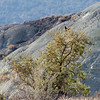 October 7, 2012.  Bird in a tree.  McInnis Canyon NCA, BLM, Colorado.