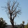 October 7, 2012.  Skeleton tree.  McInnis Canyon NCA, BLM, Colorado.