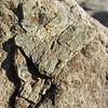 October 7, 2012.  Dinosaur bone.  McInnis Canyon NCA, BLM, Colorado.