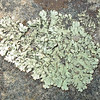 September 28, 2008 - Lichen, Mount Diablo California SP, Walnut Creek, CA.