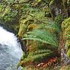 September 6, 2009 - Ferns, Rogue River National Forest, Oregon