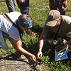 June 29, 2013.  Armand identifies a plant.  Friends of CSNM at Hobart Bluff.