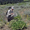 July 4, 2013.  NABA Butterfly Count.  Cascade-Siskiyou NM, Oregon.
