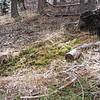January 31, 2014.  Sheep camp spring.  Bean Rock Property, private in-holding at Cascade-Siskiyou NM, Oregon