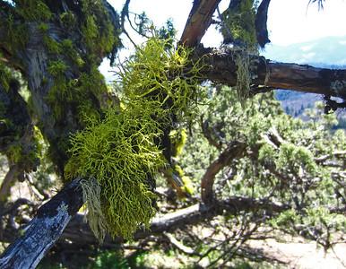 Cascade-Siskiyou NM 2014