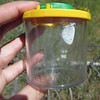 Blue butterfly in viewing container