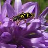 Beetle on Ookow