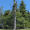 June 21, 2012 - Snag along the Greensprings Loop Trail, BLM, Oregon