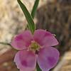 August 18, 2011 - pink flower