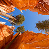 LOOK UP! - Bryce Canyon National Park