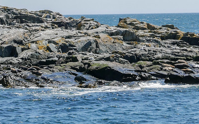 there are seals sunning on the rocks...