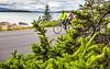 Maine - Acadia - Sojourn - D4-C1-0146 - 72 ppi-2