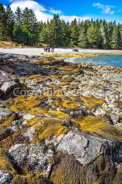 Maine - Acadia - Sojourn - D5-C2-0283 - 72 ppi