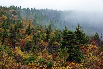 Fog-Acadia