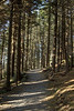 Tall pine trees on Round Bald on the Appalachian Trail in TN on Wednesday, May 15, 2013. Copyright 2013 Jason Barnette