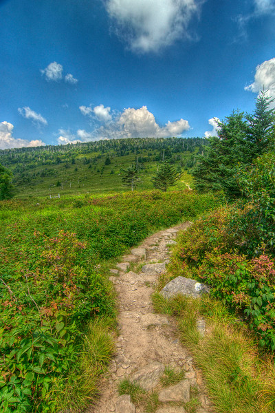 The trail curves toward the base of Mt. Rogers near the Thomas Knob Shelter at Mile 491 on the Appalachian Trail in VA on Monday, July 30, 2012. Copyright 2012 Jason Barnette