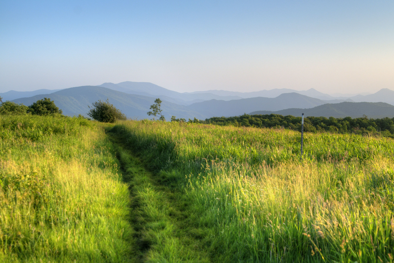 The well-worn Appalachian Trail cuts a path through tall grasses at the Beauty Spot on Unaka Mountain in Erwin, TN on Saturday, June 13, 2015. Copyright 2015 Jason Barnette The Beauty Spot is located at Mile 350.5 on the Appalachian Trail in Tennessee.