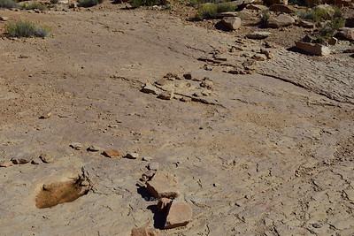 Allosaurus Tracks