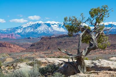 La Sal Mountains_Arches-4226
