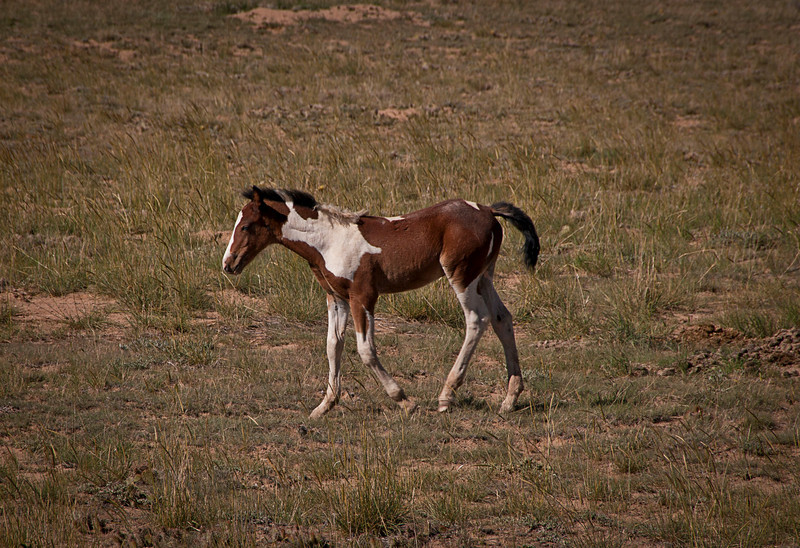 Young filly.