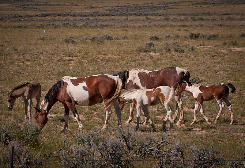 Mares with foals.
