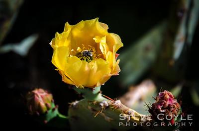 Bloomin' Bee