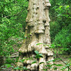 Rough trunk